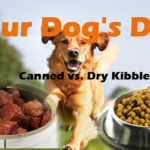 Your Dog's Diet: Canned Dog Food vs. Dry Kibble