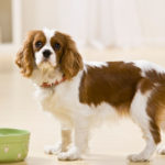Why is a Dog's Diet Important?