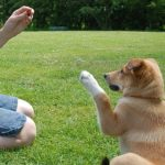 Dog Training: When To Reprimand And When To Reward
