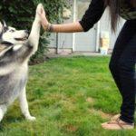 Basic Dog Training