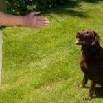 Dog Behavior Training