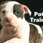 Pit Bull Terrier Puppy Training: Potty Train Your Dog