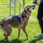 Dog Training Using the Reward Training Method