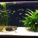 Some Of The Best All Year-round Aquarium Tips