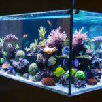 Keep it Glowing with Aquarium Lighting