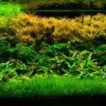 Aquarium Plants: One of the Best Ornaments in an Aquarium