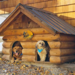 How to build a dog house for your puppy?